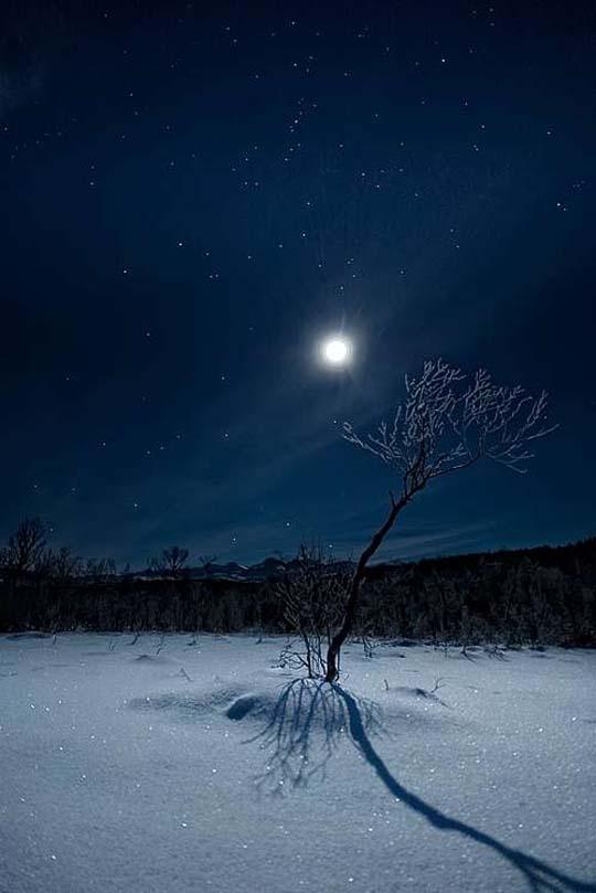 Tree by Moonlight